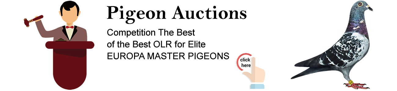 banner auction